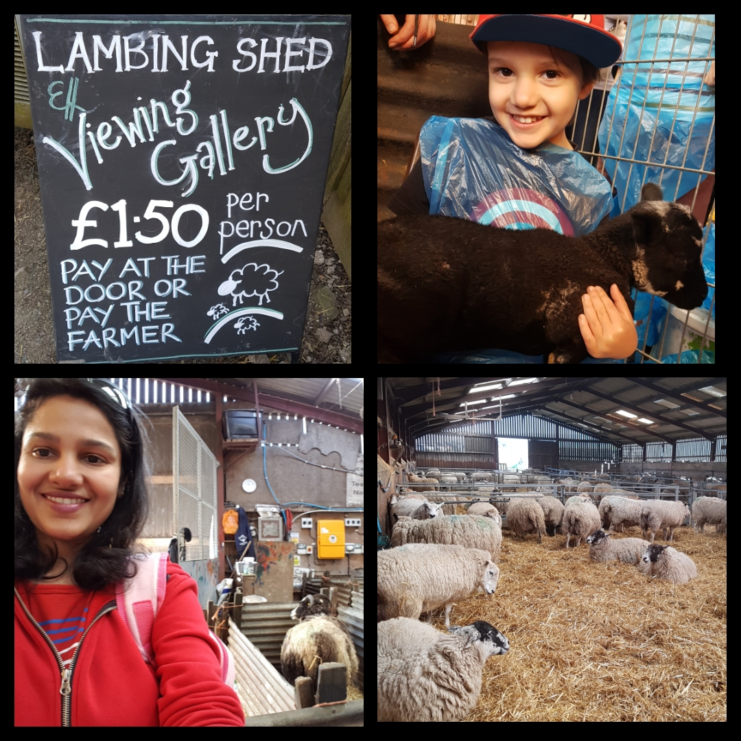 Blaze-Farm-Blogger-Review-Macclesfield-Cheshire