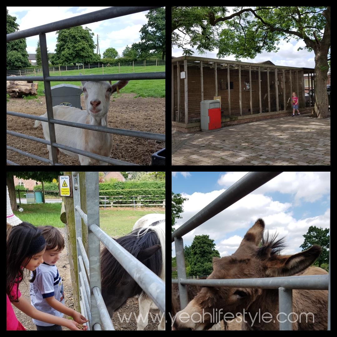Glebe-Farm-Astbury-Cheshire-Kids-Friendly-Blogger-Review