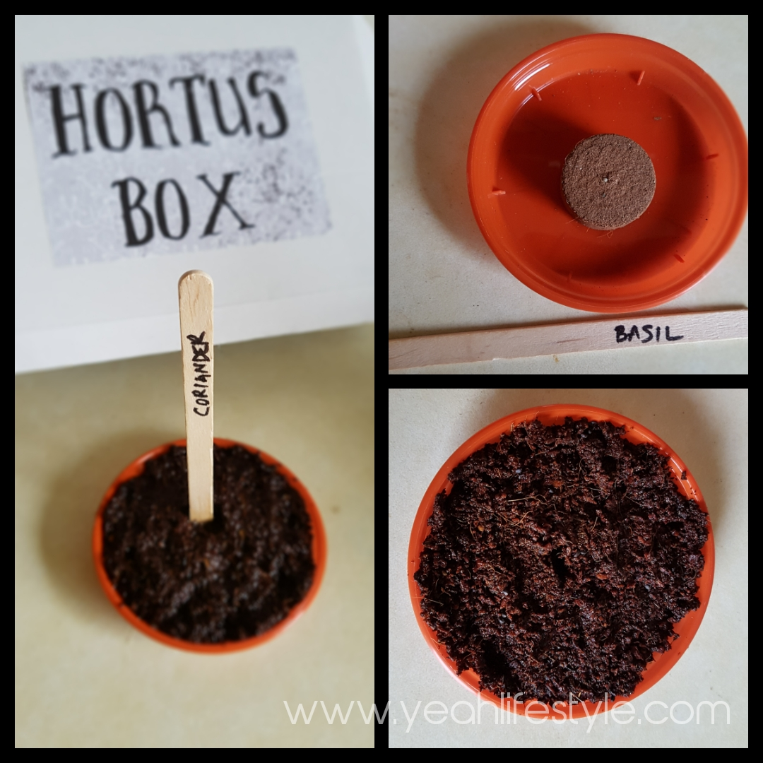 Hortus-Box-Review-Yeah-Lifestyle-Home-Blogger-Garden-Cheshire