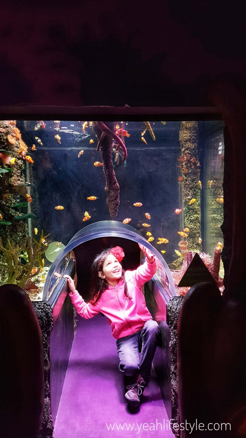 sealife-manchester-blogger-review-kids-family-day-out-activity-curious-underwater-fish