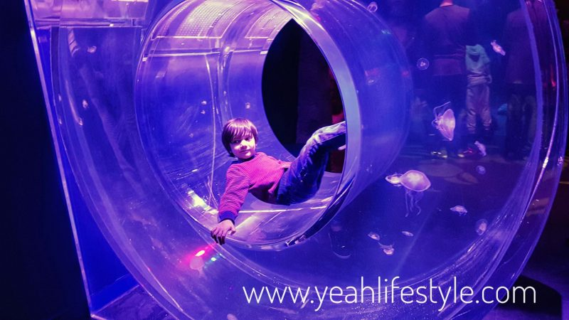 sealife-manchester-blogger-review-kids-family-day-out-activity-donut-fish-tank-intu