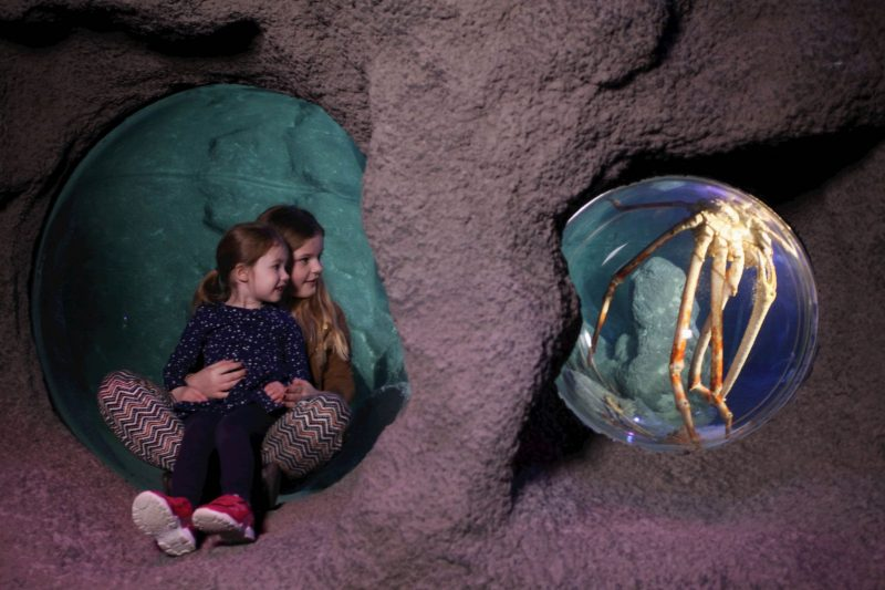 sealife-manchester-blogger-review-kids-family-day-out-activity-giant-crab-intu-trafford