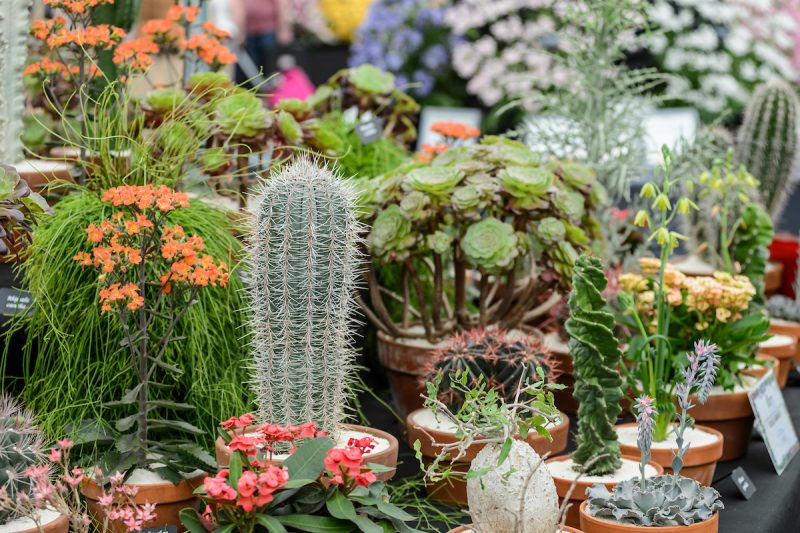 BBC Gardeners' World Live 2017 - River Street Events (15th - 17th June 2017)