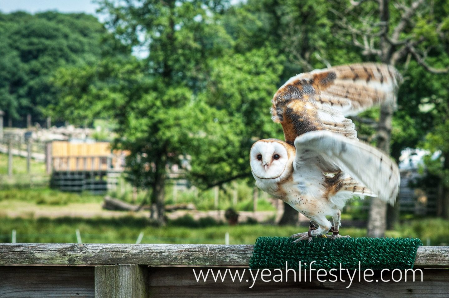 Knowsley-Safari-Park-Blogger-Review-Family-Day-Out-Owl