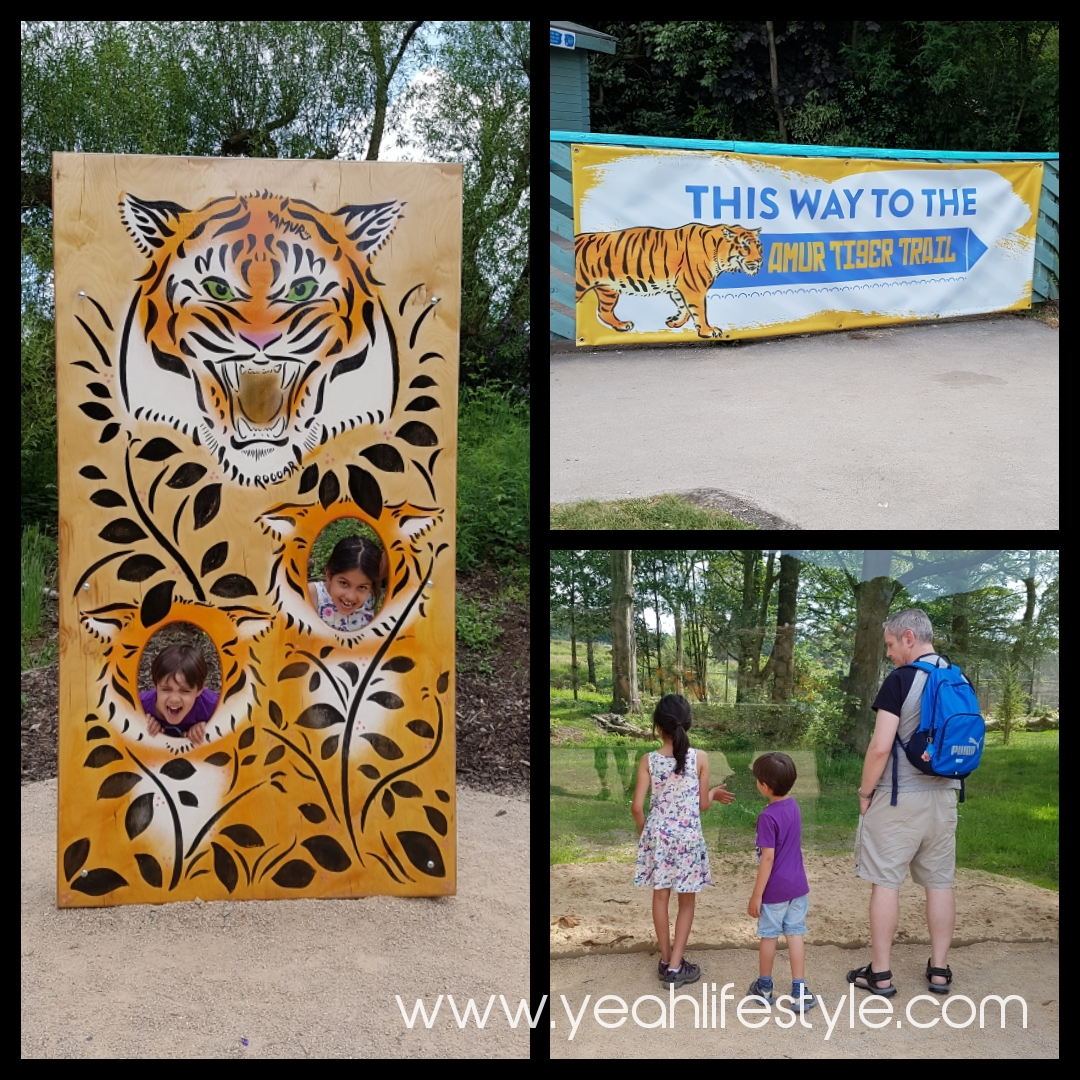 Knowsley-Safari-Park-Blogger-Review-Family-Day-Out-Tiger-Amur-Trail