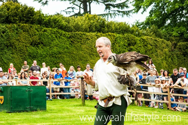 Luxury-Family-Glamping-Getaway-Warwick-Castle-Birds-Prey-Show