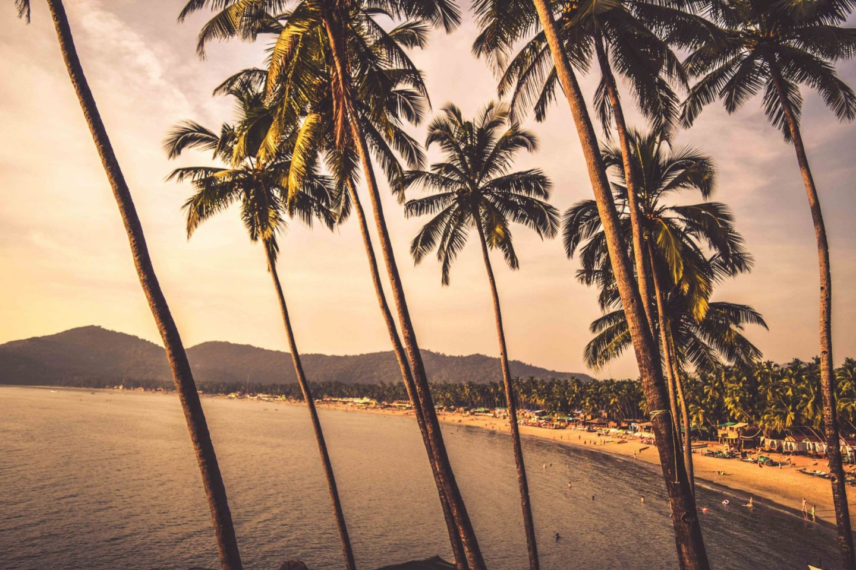 Popular-Festivals-Celebrated-in-Goa-palm-trees