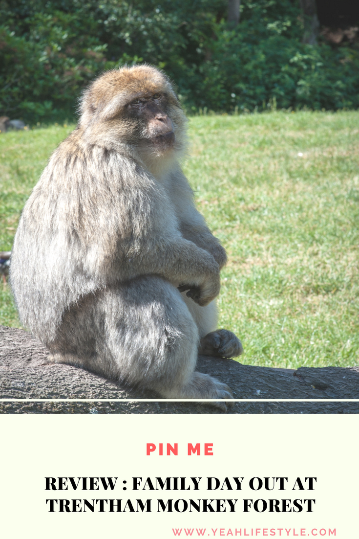 trentham-monkey-forest-travel-blogger-review-Barbary-macaque-feeding-pinterest