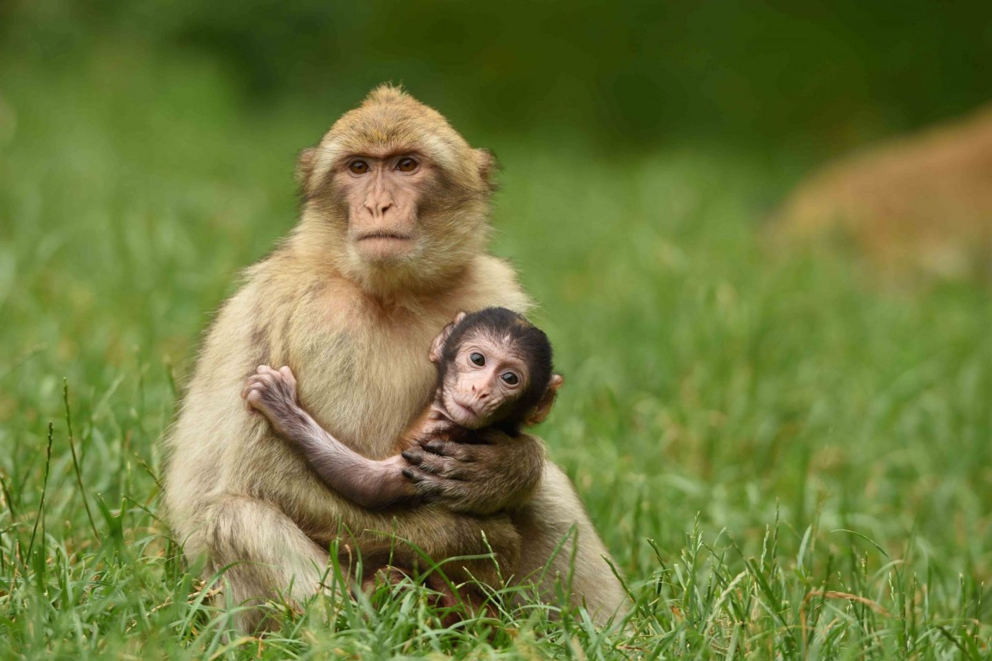 Review: Family Day Out at Trentham Monkey Forest *
