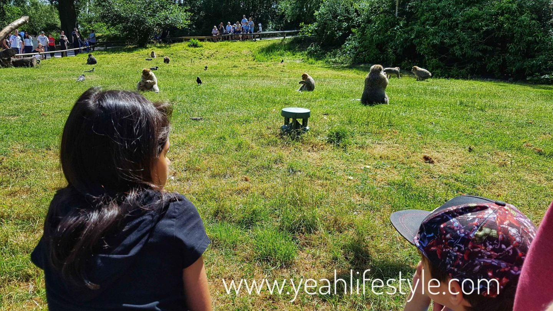 trentham-monkey-forest-travel-blogger-review-monkey-feeding-area