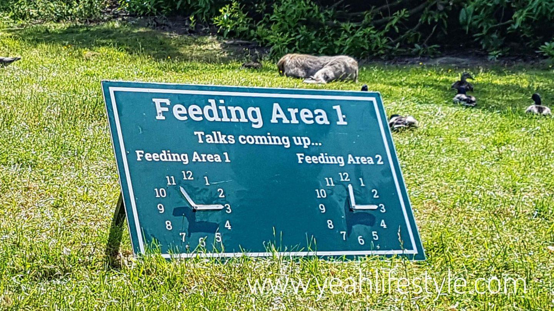 trentham-monkey-forest-travel-blogger-review-monkey-feeding-time