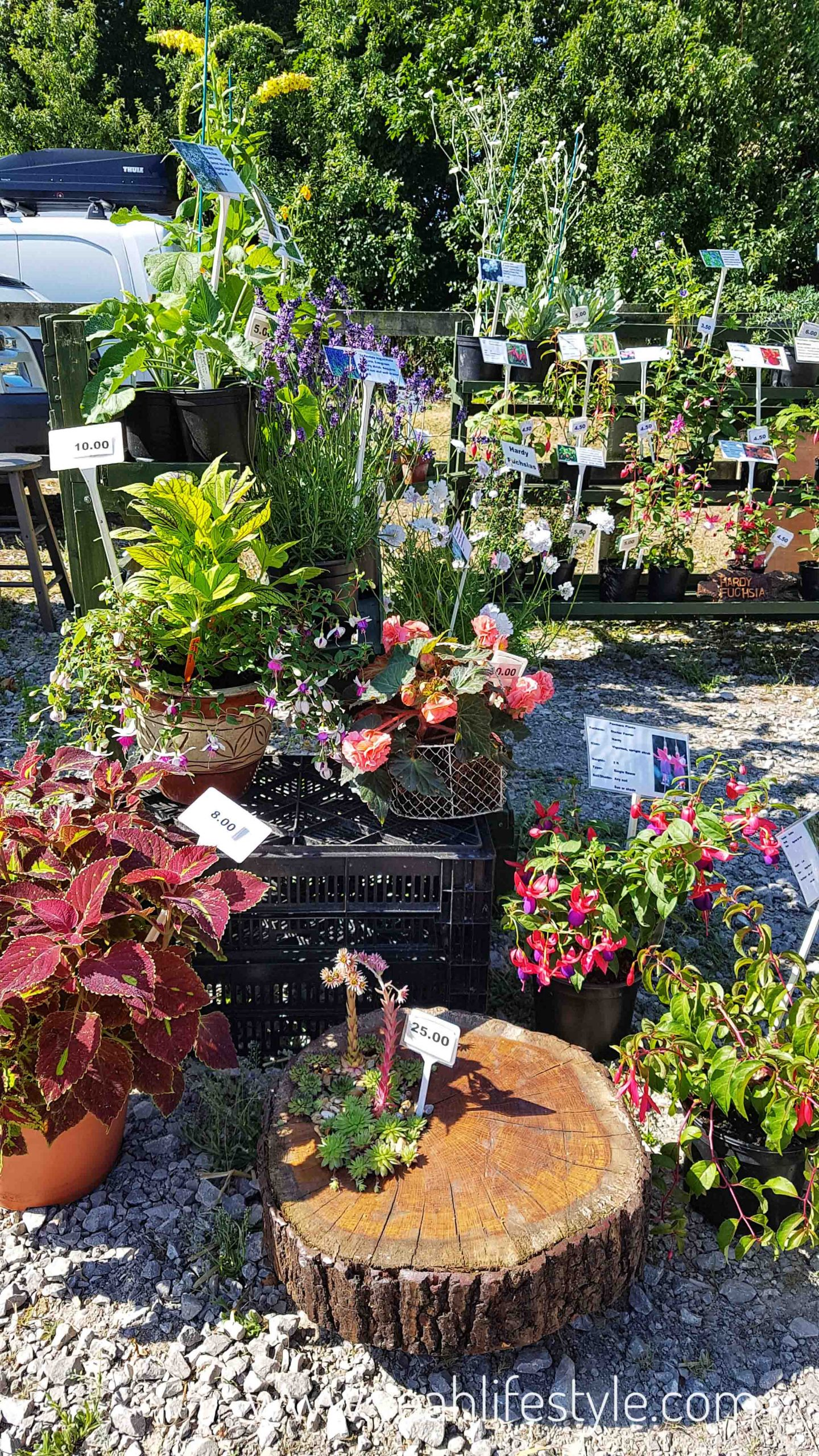 rode-hall-farmers-market-scholar-green-cheshire-blogger-review-outdoor-plants